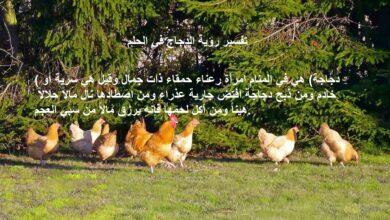 تفسير حلم الدجاج مكتوبة في صورة.