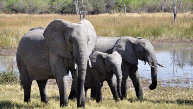 مجموعة فيله