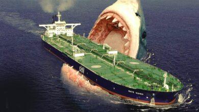 اكبر سمكة قرش