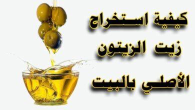 كيفية استخراج زيت الزيتون