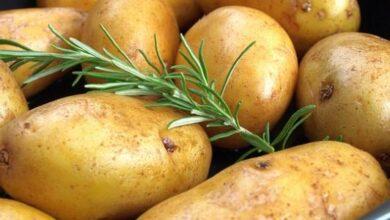 تخزين البطاطس موسميا