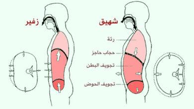ما هو التنفس