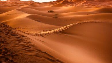 بيئة صحراوية