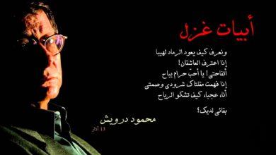 اشعار عشق قوية للشاعر محمود درويش.