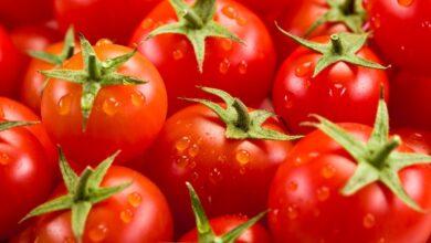 ثمرة طماطم