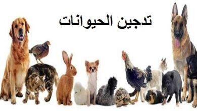 انواع الحيوانات المدجنة