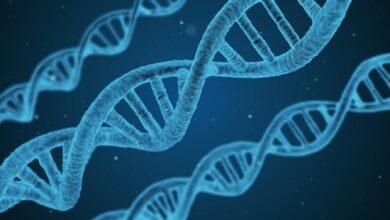 معلومات مهمة و قيمة عن الجينات
