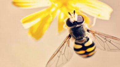خلية النحل.