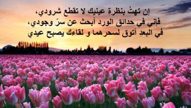 حقول الورد الجميلة.
