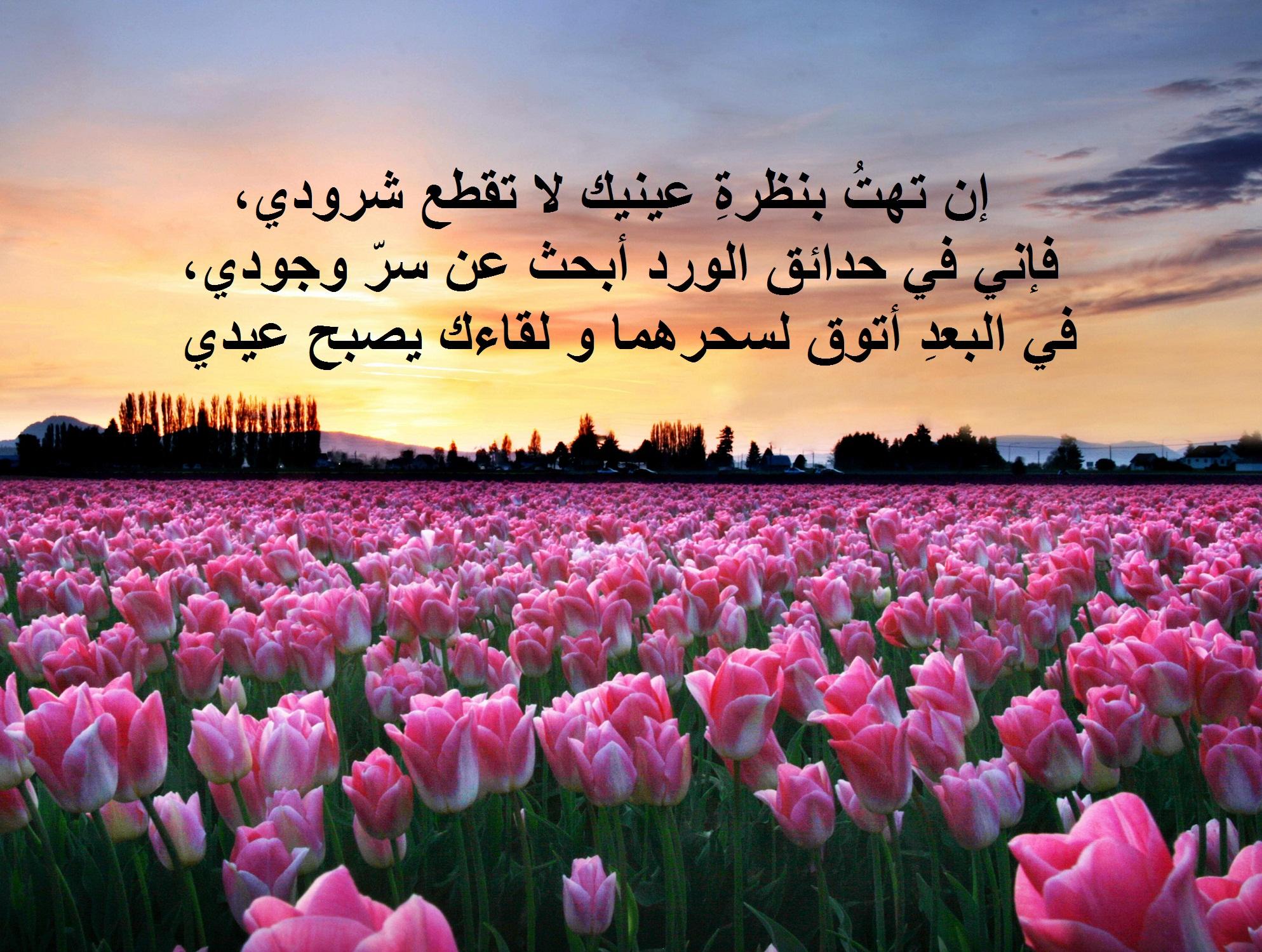 عبارات عن الورد احلى كلام 2