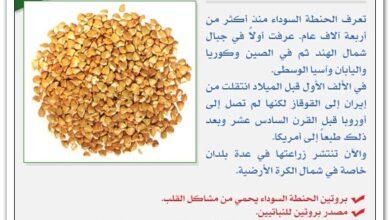 فوائد الحنطة.