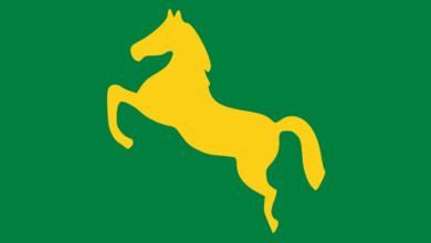 الحصان الجامح