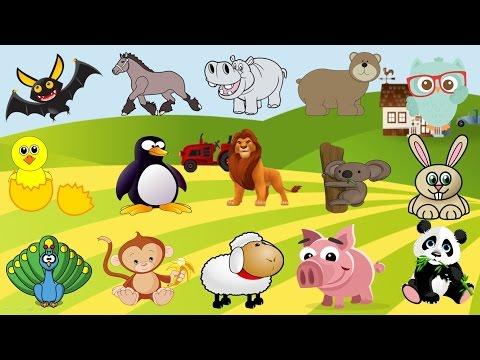 مسابقات عالم الحيوان