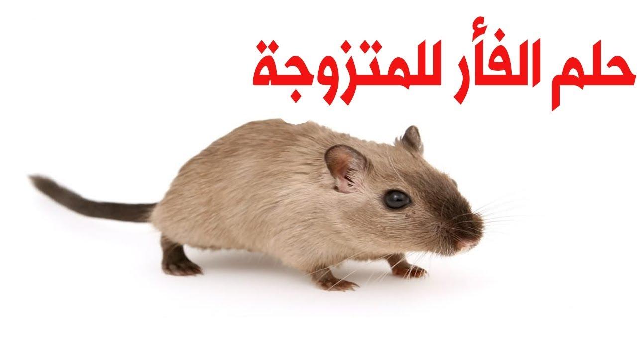 حلم الفأر للمتزوجة