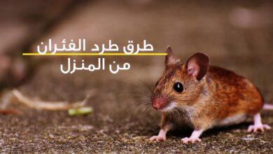 طرق طرد الفئران