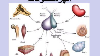 معلومات عن الهرمونات