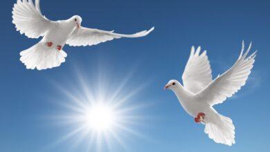 حكم وامثال عن والسلام