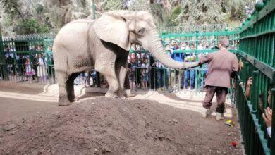 الفيل في الحديقة
