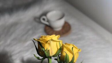 دلالة الورد الاصفر