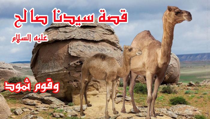 قصة النبي صالح عليه السلام