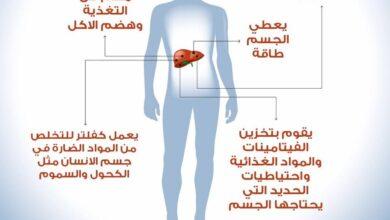 أهم وظائف الكبد