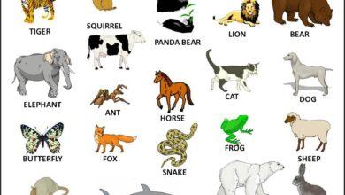 بعض الحيوانات الموجودة في الطبيعة