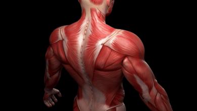 صورة توضح عضلات جسم الإنسان