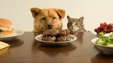 أكل بيتي للكلاب و القطط.