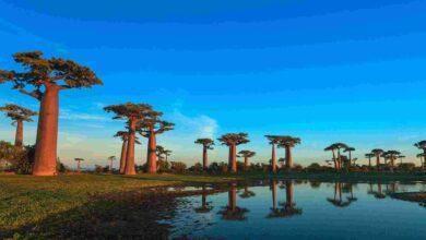 السياحة فى مدغشقر