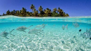 سواحل جزر هواوي الساحرة.