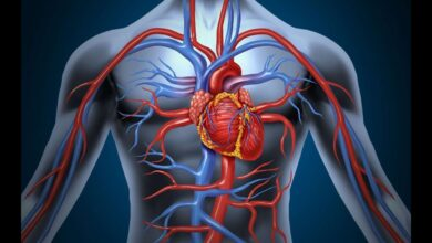 من هو مكتشف الدورة الدموية ؟