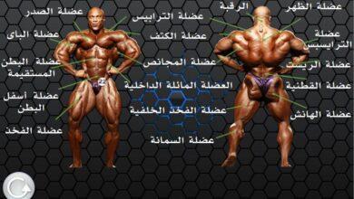 تشريح عضلات الجسم
