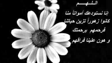 صورة أبيض و أسود لوردة مكتوب فيها رثاء و كلام حزن.