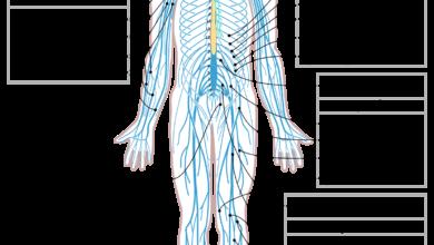 رسم للجهاز العصبي بالكامل.