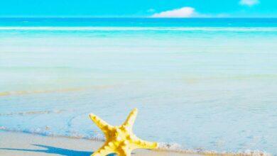 ما هو أكبر بحر في العالم