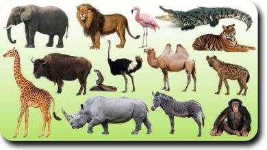 مجموعة من الحيوانات