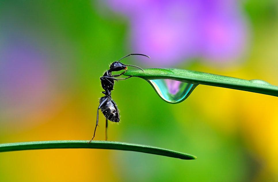 خلفية لمنظر طبيعي لملة تحاول أن تشرب قطرة ماء.