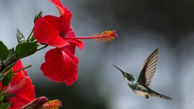خلفية لمنظر طبيعي خلاب وردة حمراء و طائر يطير بجوارها.